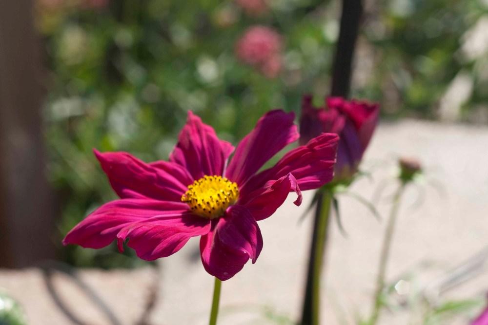 In the Garden (1/5)
