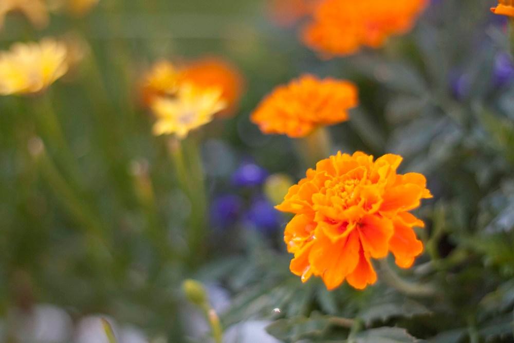 In the Garden (5/5)